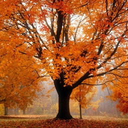 Autumn Tree Fall Wallpapers - Winter Backgrounds