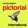Racing Pigeon Pictorial International