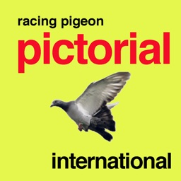 Racing Pigeon Pictorial International