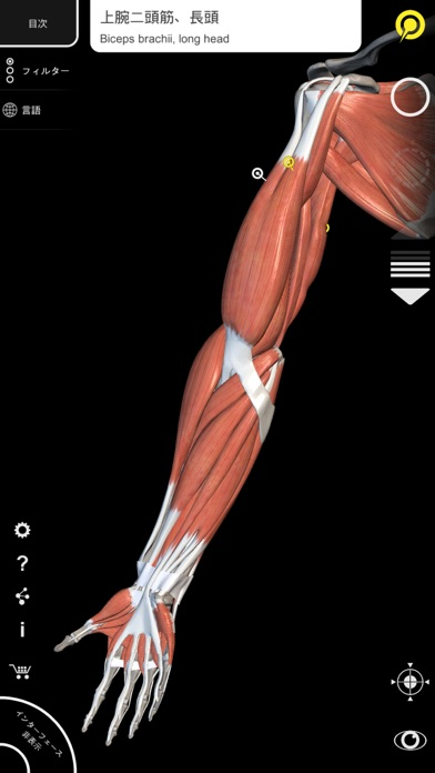 筋肉 | 骨格 - 解剖学3D アトラス - 窓用