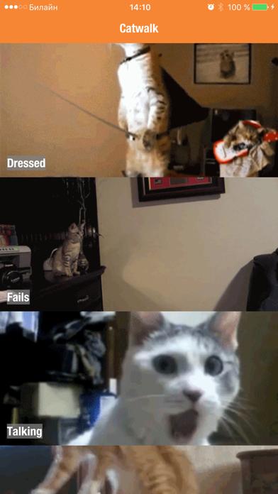 Catwalk - funny walking and talking cats & kittens screenshot one