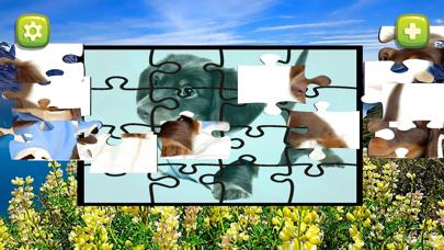 点击获取jigsaw collection dog brain puzzles games