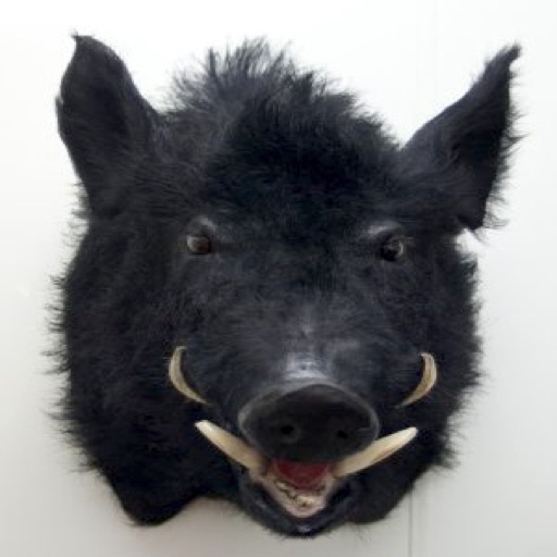 Pig Sticker, wild boar hunting