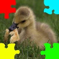Codes for Ducklings, Goslings Jigsaw Puzzles Hack