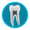 Dental Corpus Anatomy