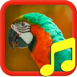 Bird Calls and Sounds. Sounds for Relax and Sleep