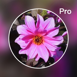 Photo Blur Editor Pro - Touch Blur Effects &Mosaic