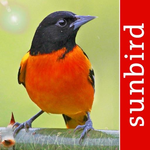 Bird Id USA Guide to identify Backyard Birds