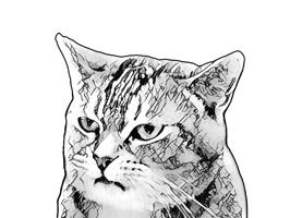 Gorma the Cat