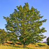 Bomen-Determinatie