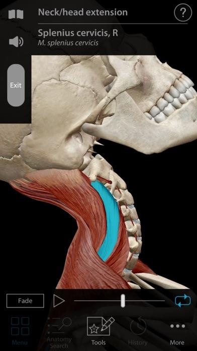 Screenshot for Muscle Premium - Human Anatomy, Kinesiology, Bones in Denmark App Store