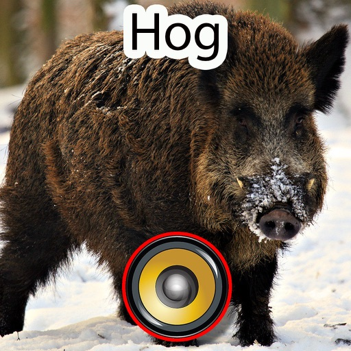 Real Hog Hunting Calls & Sounds