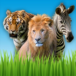 Zoo Sounds - Fun Educational Games for Kids