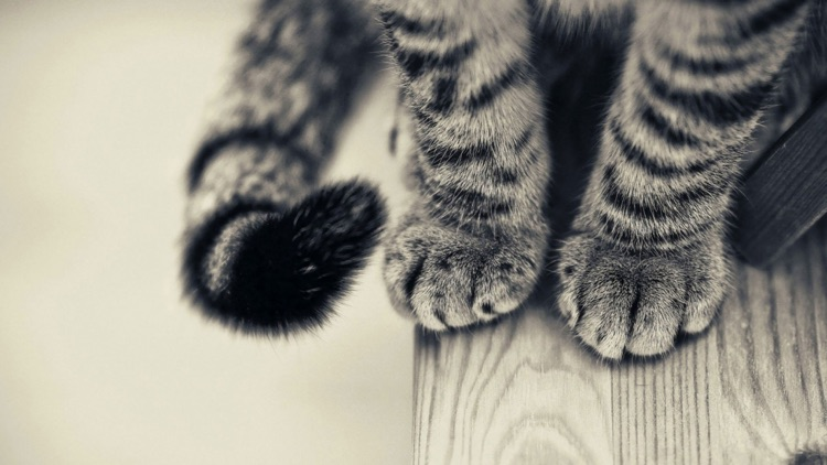 Cat Wallpaper Top HD