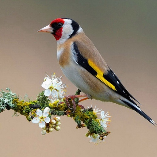 Goldfinch Wallpapers HD- Quotes and Art icon