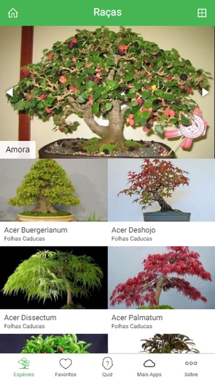 Bonsai Species