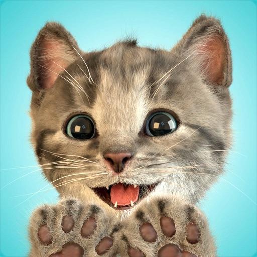 小さな子猫 - お気に入りの猫