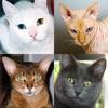 猫の品種: 猫のすべての人気のある品種についてのクイズします - iPhoneアプリ