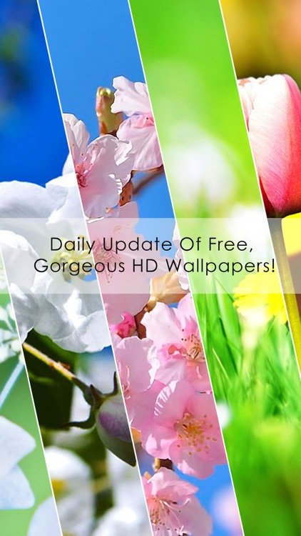 Pink Flowers HD WallPapers & Background Free screenshot-4
