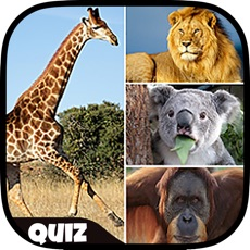 Activities of Kids Education Game With Animals