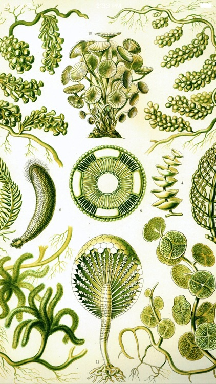 植物百科全书