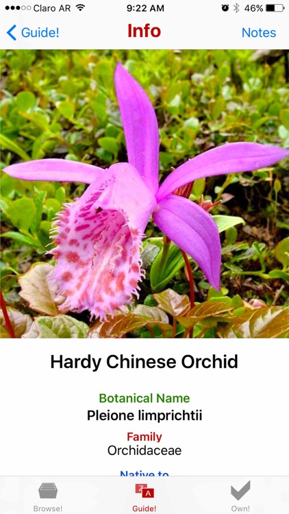 Orchids Guide!