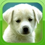 Puppy Wallpapers – Cute Puppy Pictures & Images