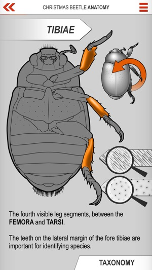 Xmas Beetle ID Guide on the App Store