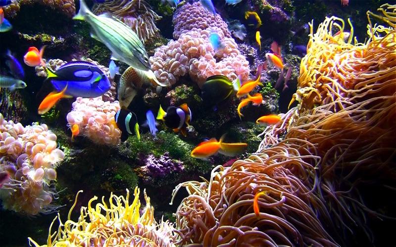 Akvarium+: Ocean skärmsläckare på PC
