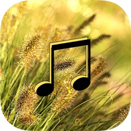 Wind Sounds - Wind Music,Relaxing and Sleep.