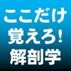 Taro Tomura - ここだけ覚えろ!解剖学ULT SP アートワーク