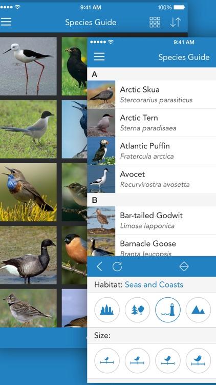 iKnow Birds 2 LITE