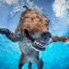 犬のスイミングレース