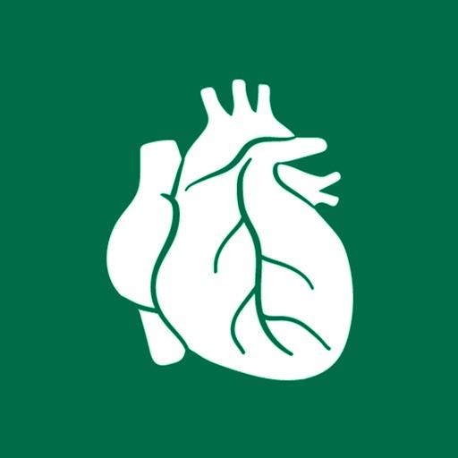 Human Organs Anatomy Reference