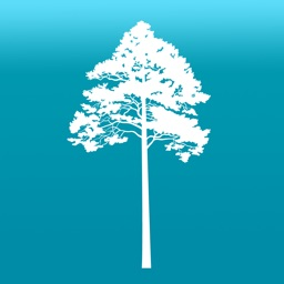 Arboreal - Height of tree