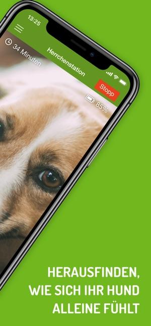 Warum sollte ich meine Haustiere via Webcam beobachten?