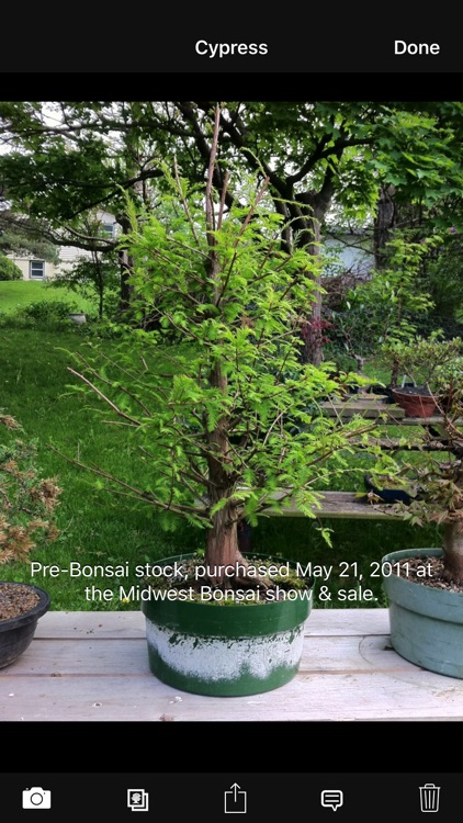 Bonsai Album screenshot-2