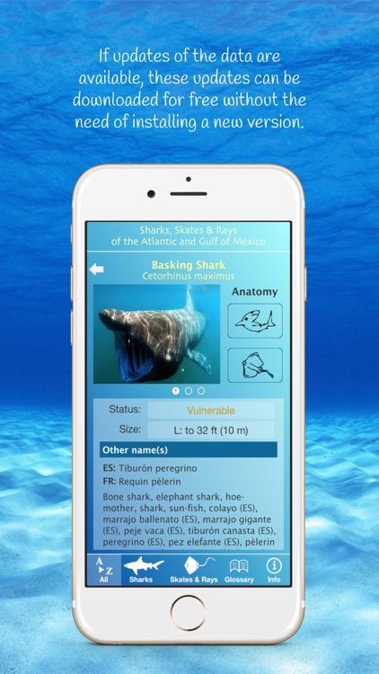 Sharks and Rays screenshot-3