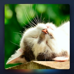 Relax Music for Cats