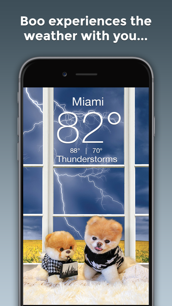 Boo Weather Pomeranian Puppy App For Iphone Free Download Boo Weather Pomeranian Puppy For Ipad Iphone At Apppure