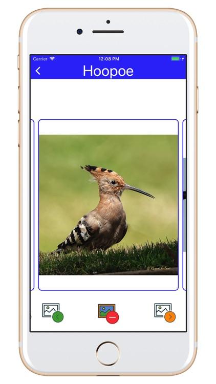 Birds of Jordan 2 screenshot-6