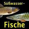 Europäische Süßwasserfische