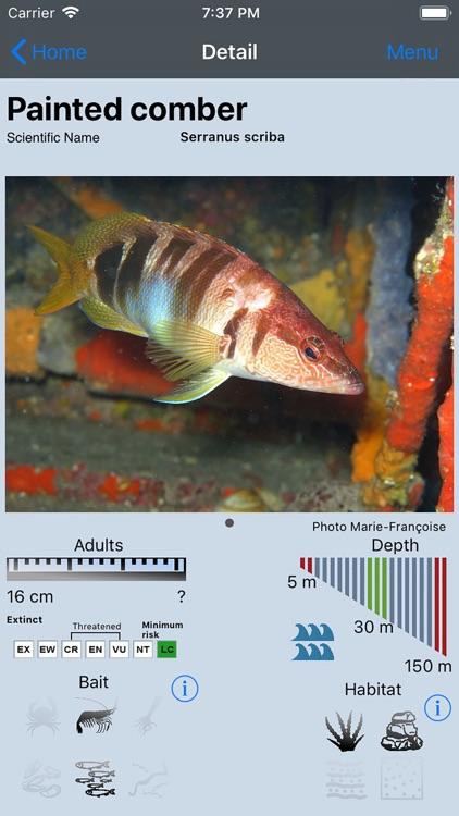 Fish Bait Lure Lite Quiz 2020