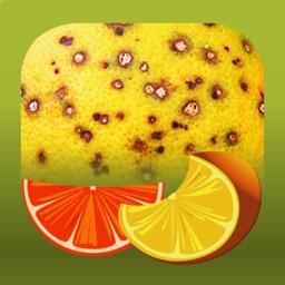 Citrus Diseases Key
