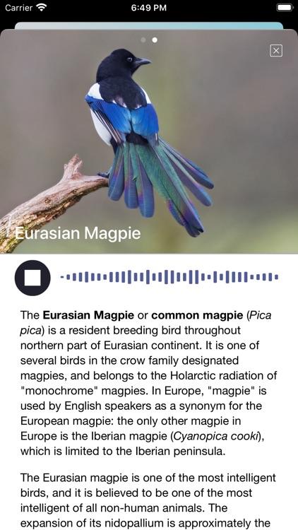 Bird Song/Photo Identification