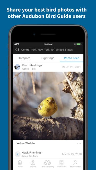 Audubon Bird Guideのおすすめ画像5