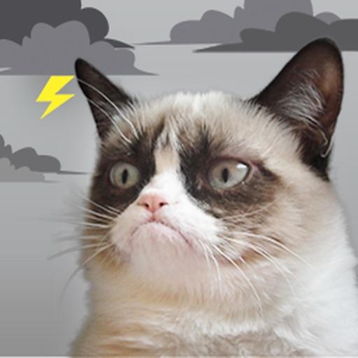 Grumpy Cat's Funny Weather