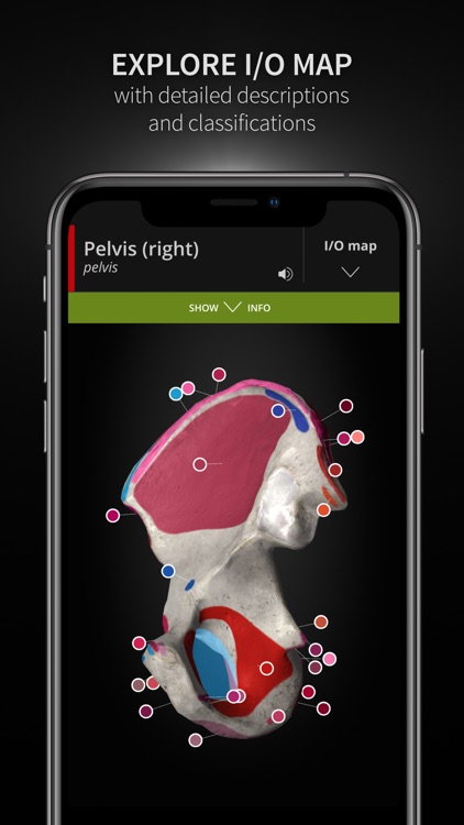 Anatomyka screenshot-4