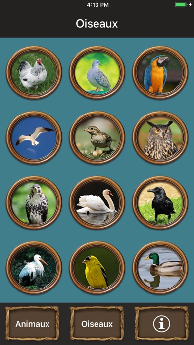 Animals Talking app image