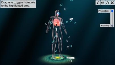 Respiratory system physiology screenshot 3